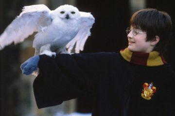 Hari Poter/ Photo: imdb.com