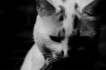 Mačka/Photo: Pixabay