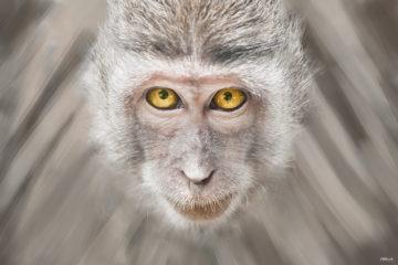 Ja majmun/ Photo: Aleksandar Jovković