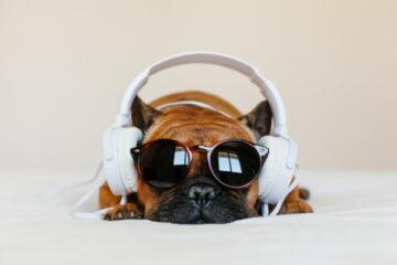 Muzika, kućni ljubimci/Photo: Freepik