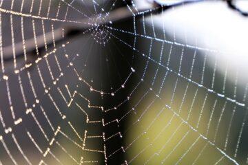 Paukova mreža/Photo: Pixabay